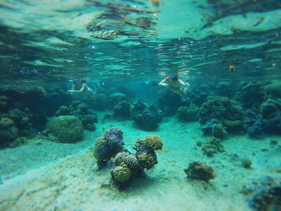 https://tahititourisme.com.br/wp-content/uploads/2017/08/Bora-Bora-Reef-Discovery-2.jpg