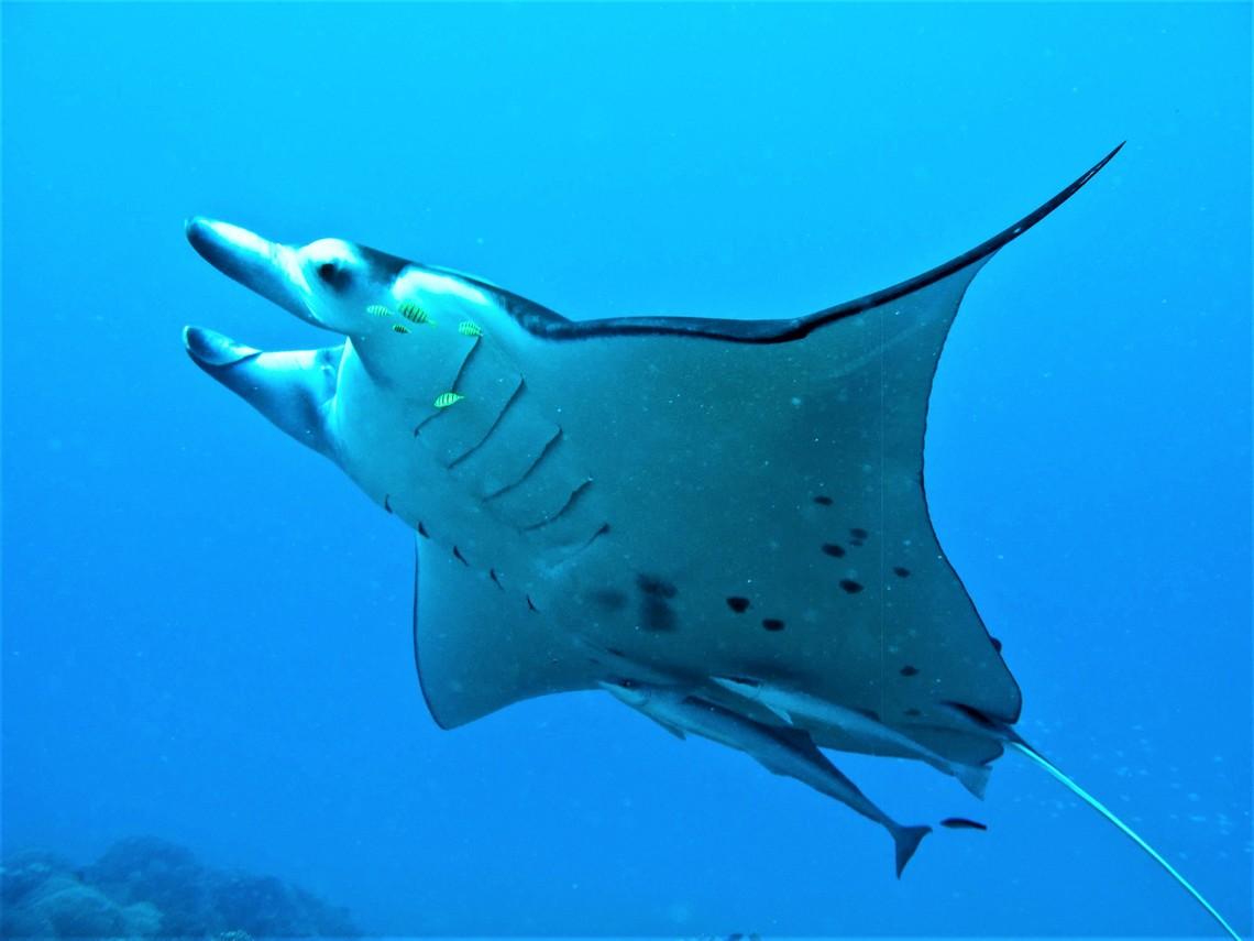 https://tahititourisme.com.br/wp-content/uploads/2017/08/Bora-Bora-Reef-Discovery-3.jpg