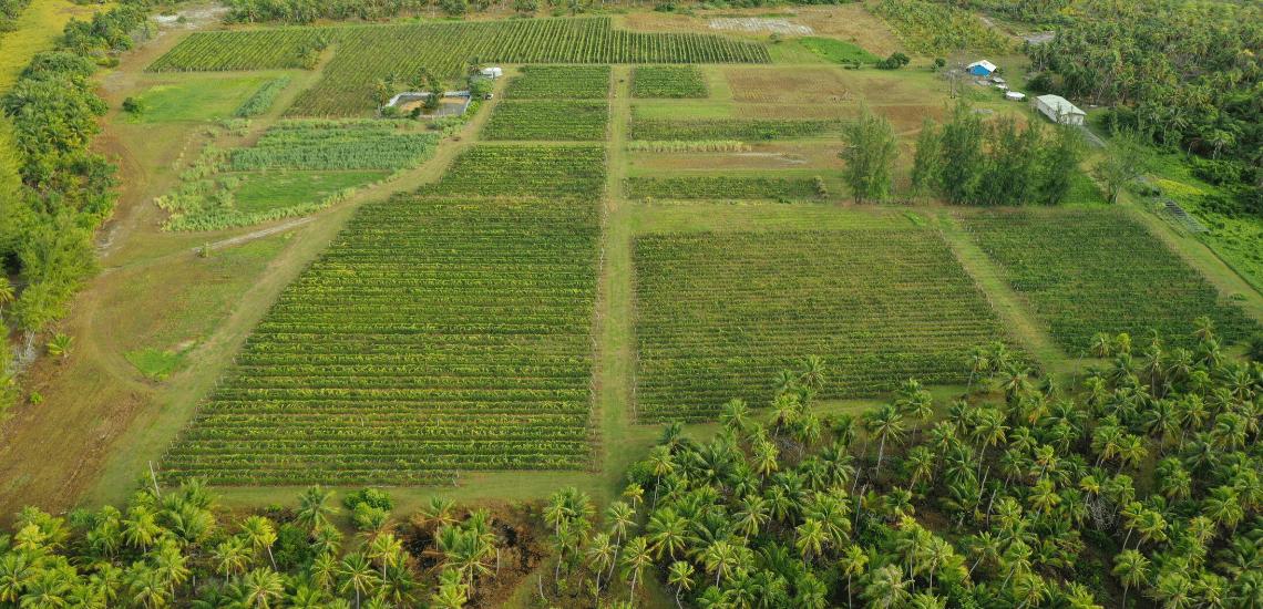 https://tahititourisme.com.br/wp-content/uploads/2017/08/Vin-de-Tahiti_1140x550-min.png