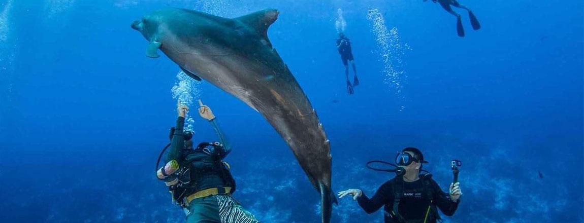 https://tahititourisme.com.br/wp-content/uploads/2017/10/Rangiroa-Diving-Center-1150x440px.jpg