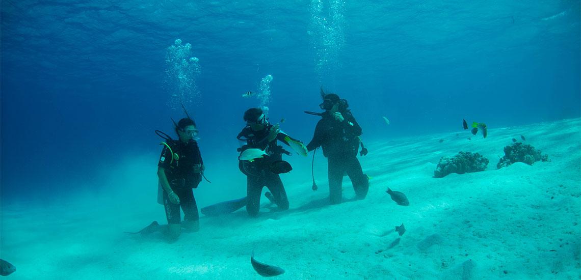 https://tahititourisme.com.br/wp-content/uploads/2019/04/Tahiti-Nui-Diving-1140x550.jpg