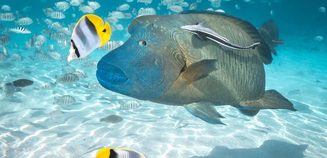 https://tahititourisme.com.br/wp-content/uploads/2020/02/SnorkelingExpeditions2_1140x550-min.png