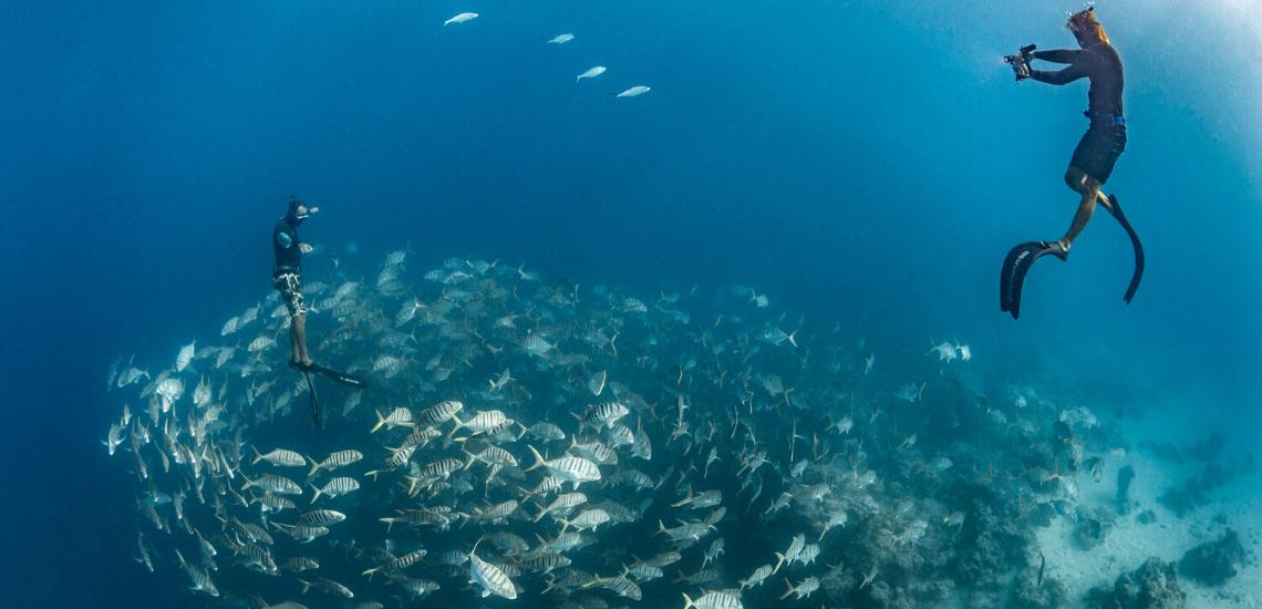 https://tahititourisme.com.br/wp-content/uploads/2020/02/SnorkelingExpeditions_1140x550.png