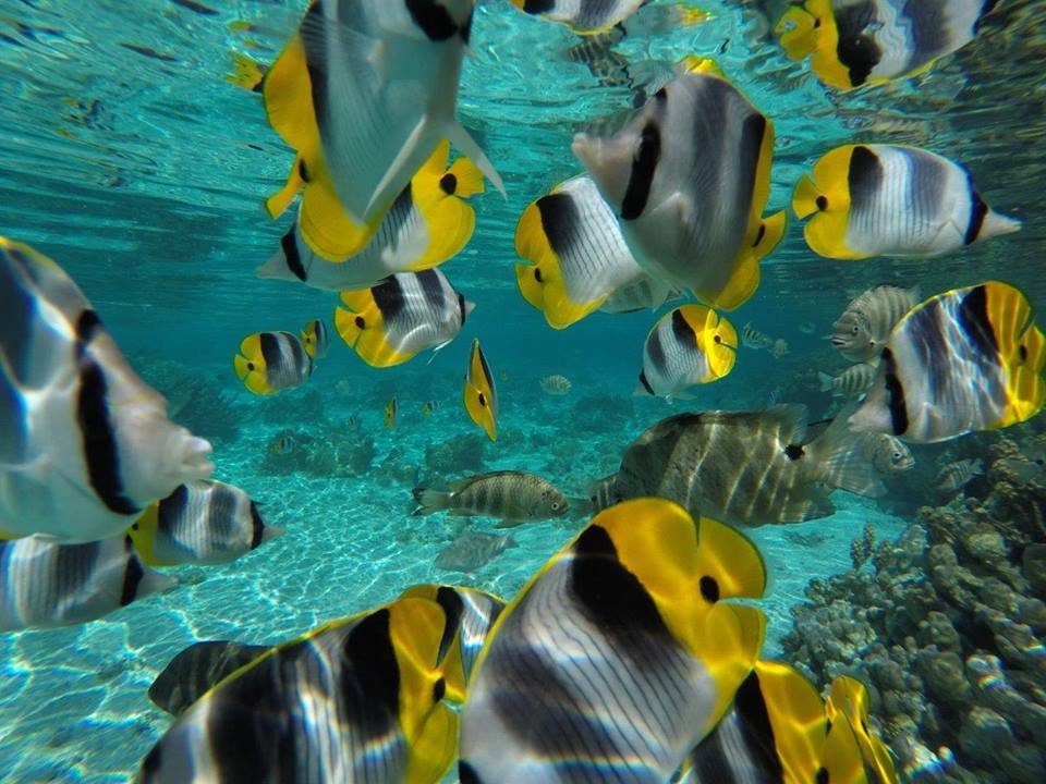 https://tahititourisme.com.br/wp-content/uploads/2020/06/jardin-corail-tahaa-5.jpg