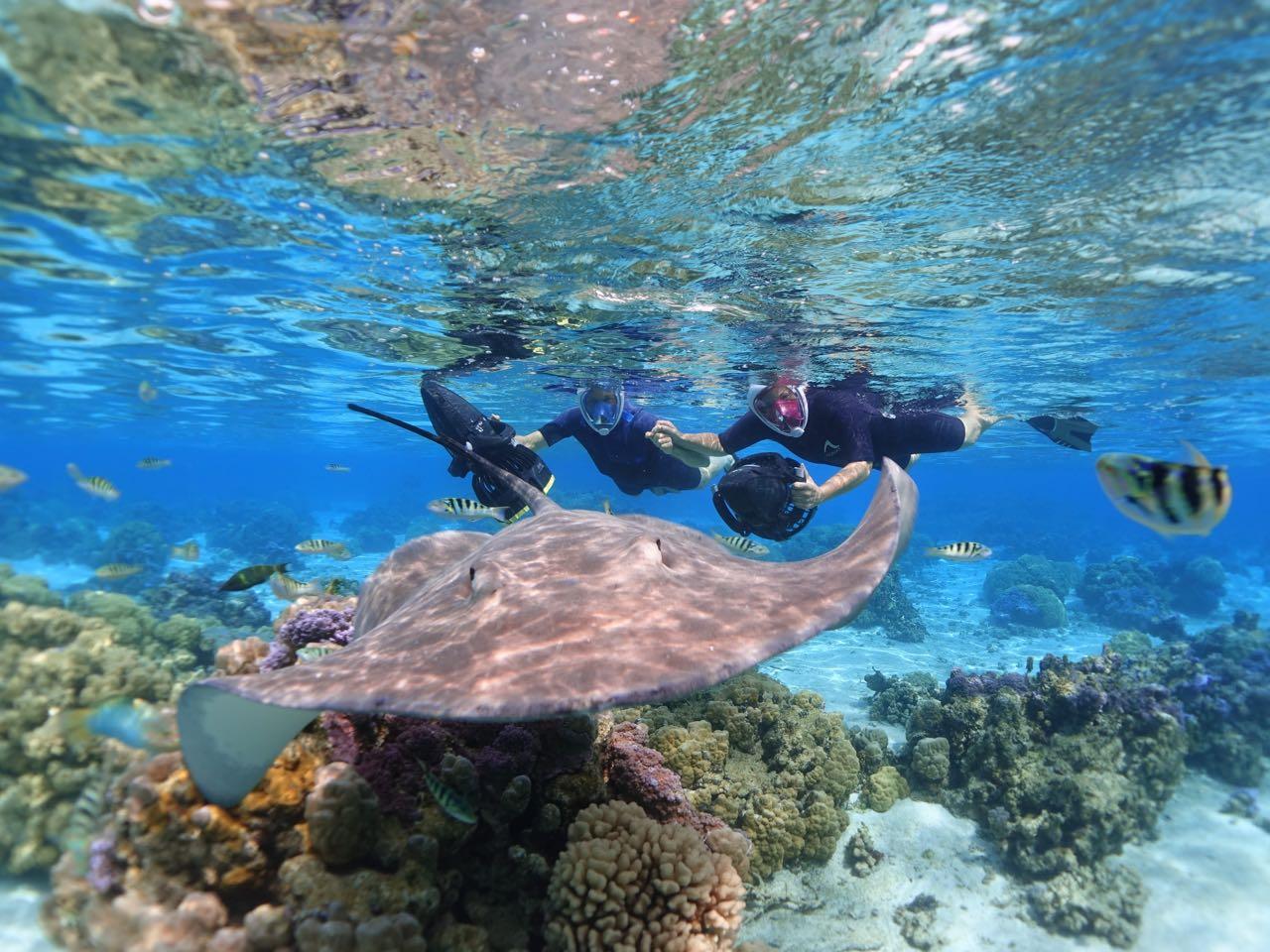 https://tahititourisme.com.br/wp-content/uploads/2020/09/Sea-Scooter-Snorkeling-Tour-à-moorea-copie-2.jpg