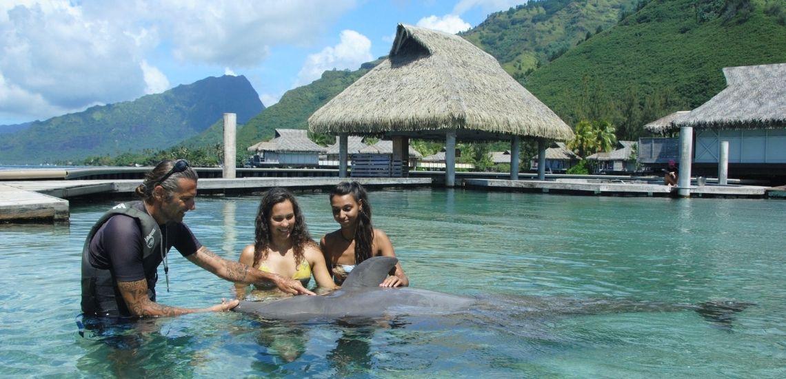 https://tahititourisme.com.br/wp-content/uploads/2021/01/Offre_Moorea-Dolphin-Center.jpg